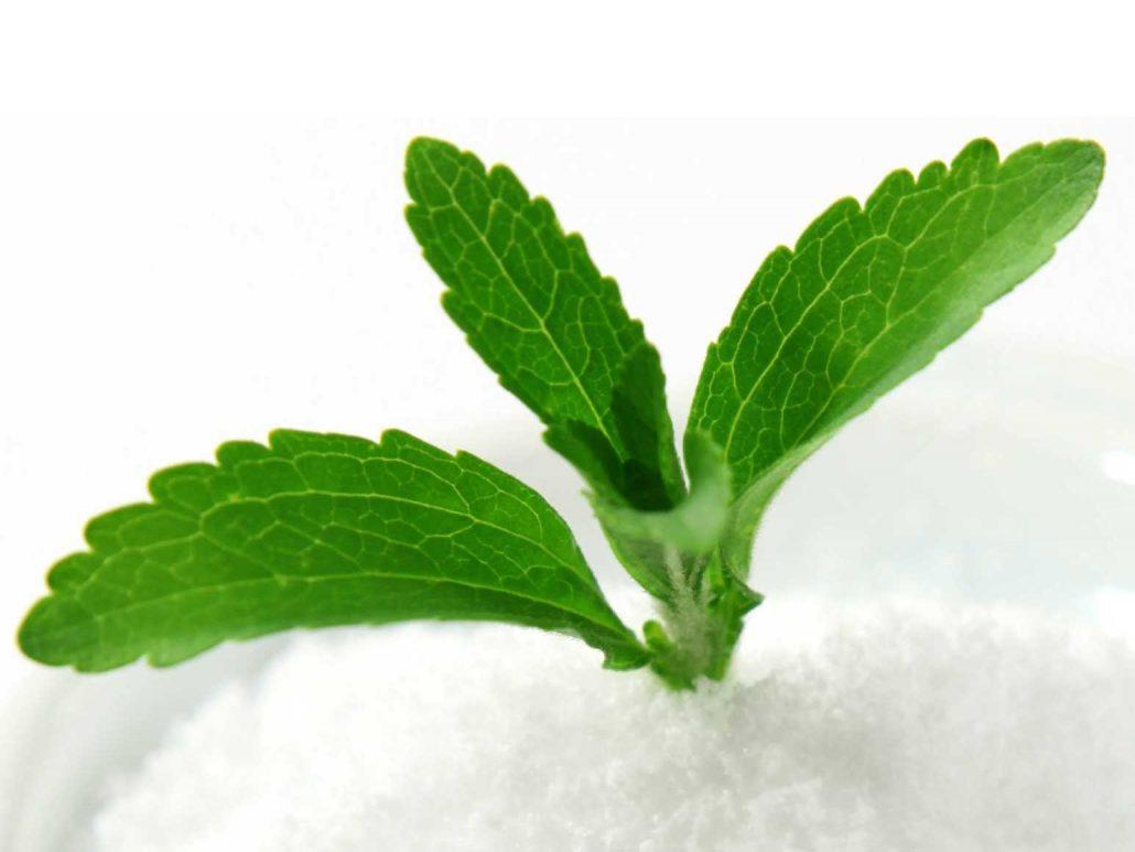 Resultado de imagem para stevia