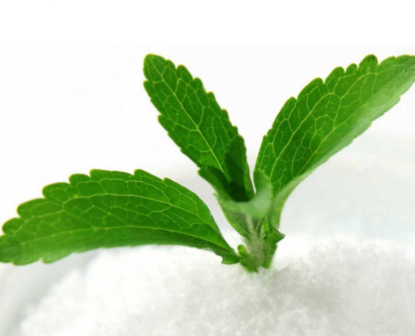 Stevia plant & powder
