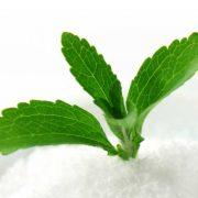 Stevia planta y polvo